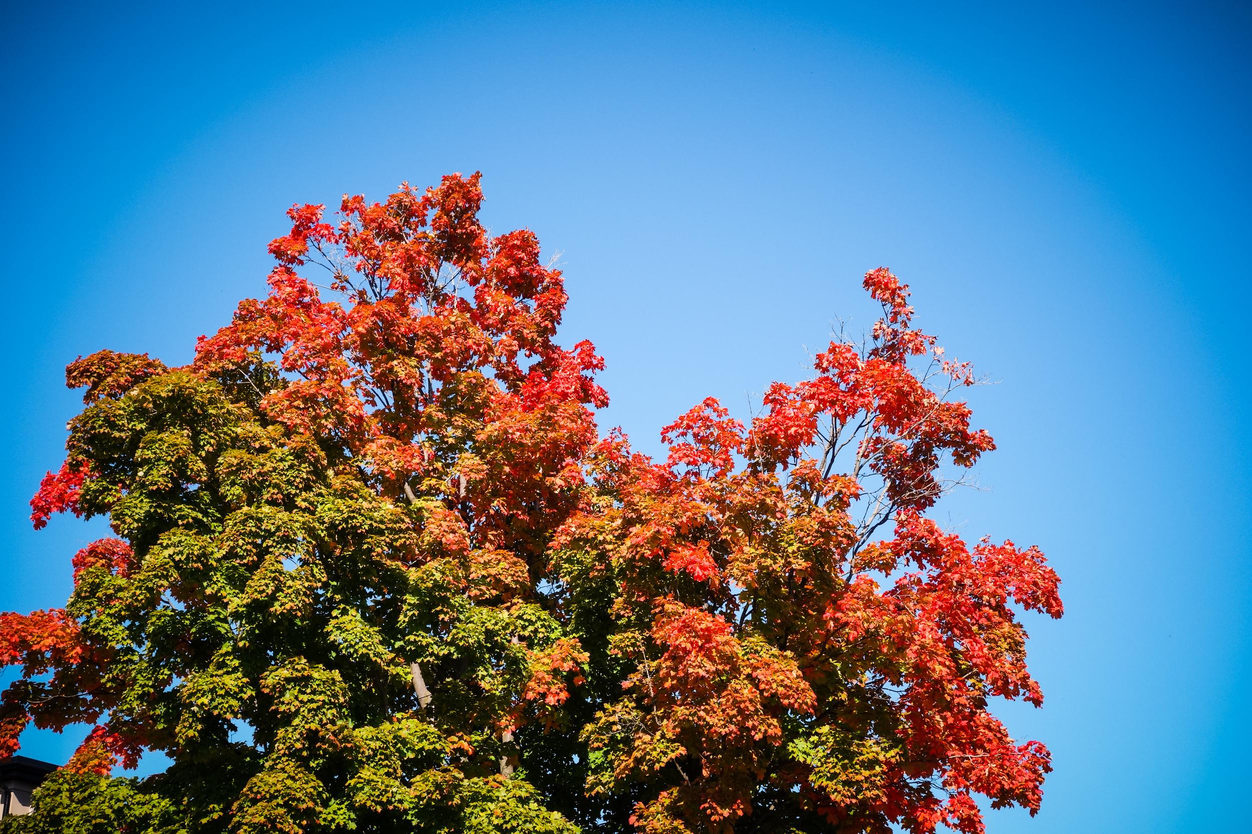 Toronto-Autumn-9.jpg