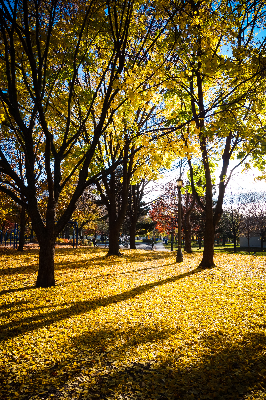 Autumn-20.jpg