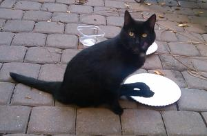 My friend Stray after a tasty meal. She uses her hind feet to wash her face.