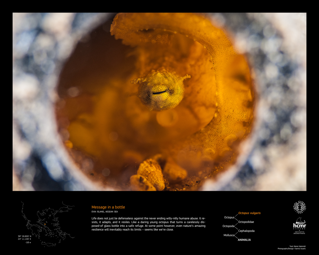 octopus_evia_EN.jpg