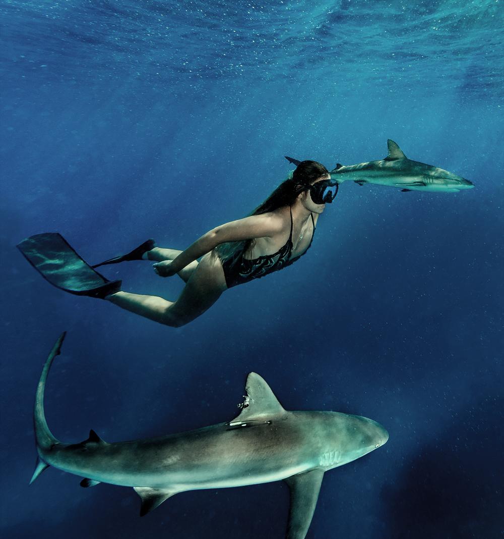 sharks21.jpg