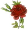 deep_red_rose.png