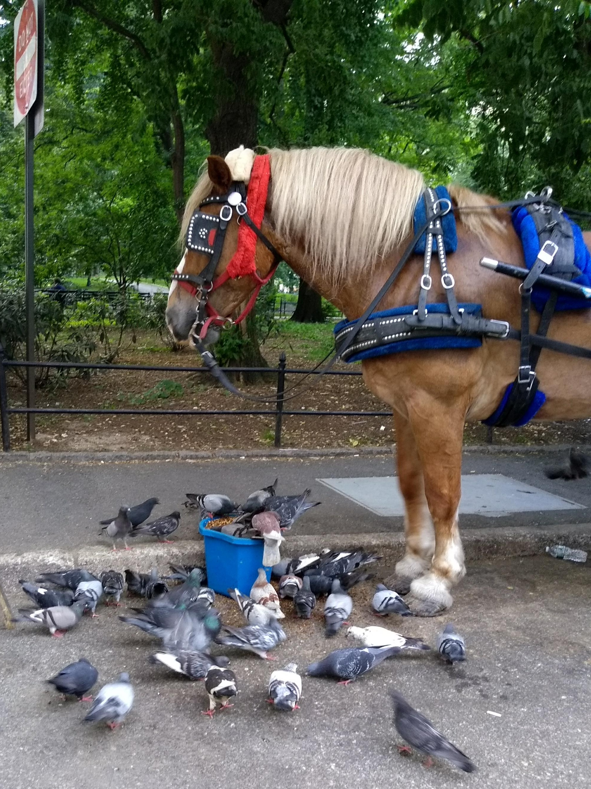 the horse sharing grain with the pigeons