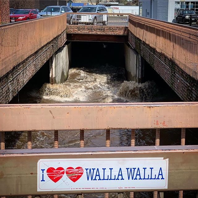 Mill creek is moving! This creek flows under downtown in multiple places. Here, at 1st & Main St, it is coming out from under the old theater (now Macy's) and going under the parking lot on Rose. #flowingwater