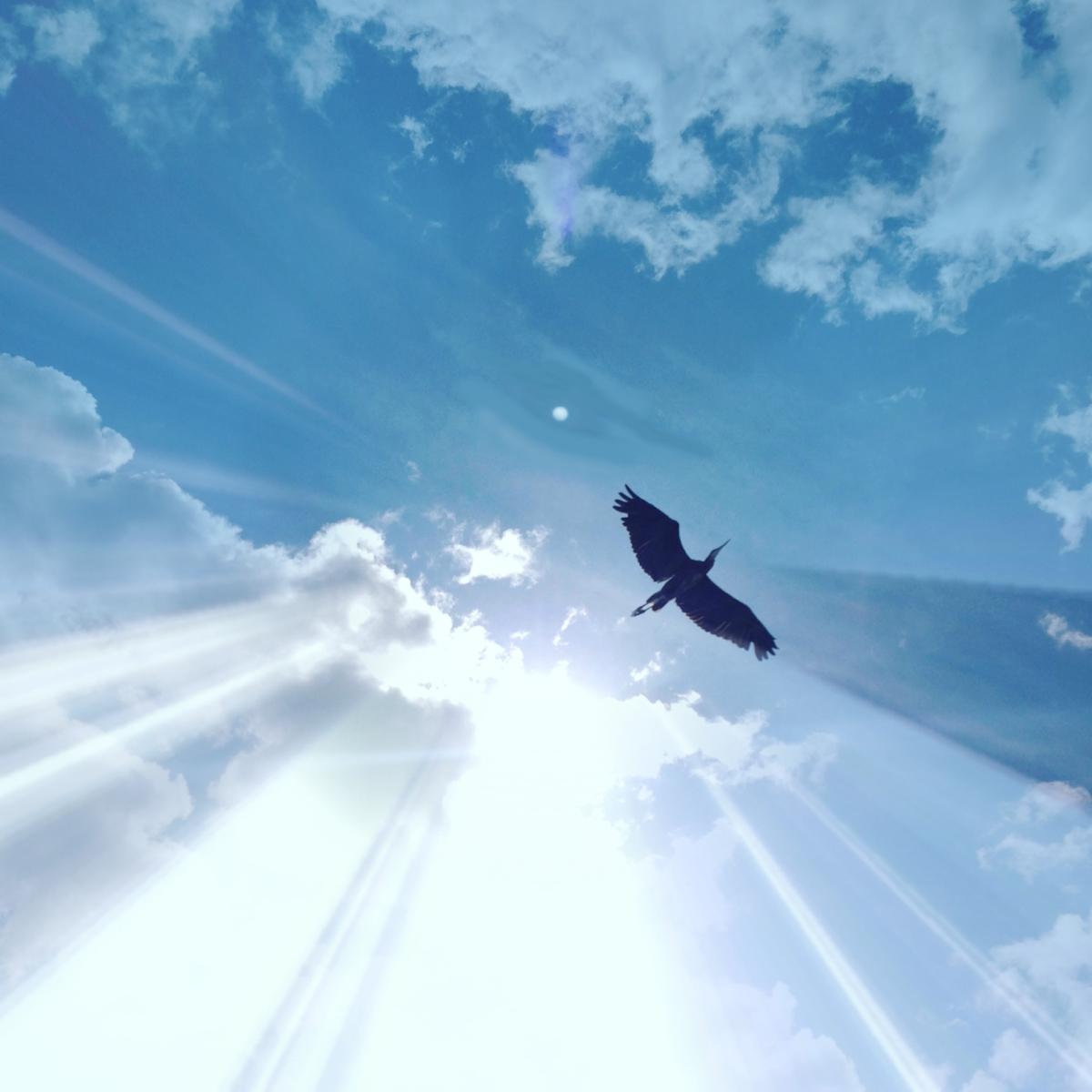 heron-sky.-freedom