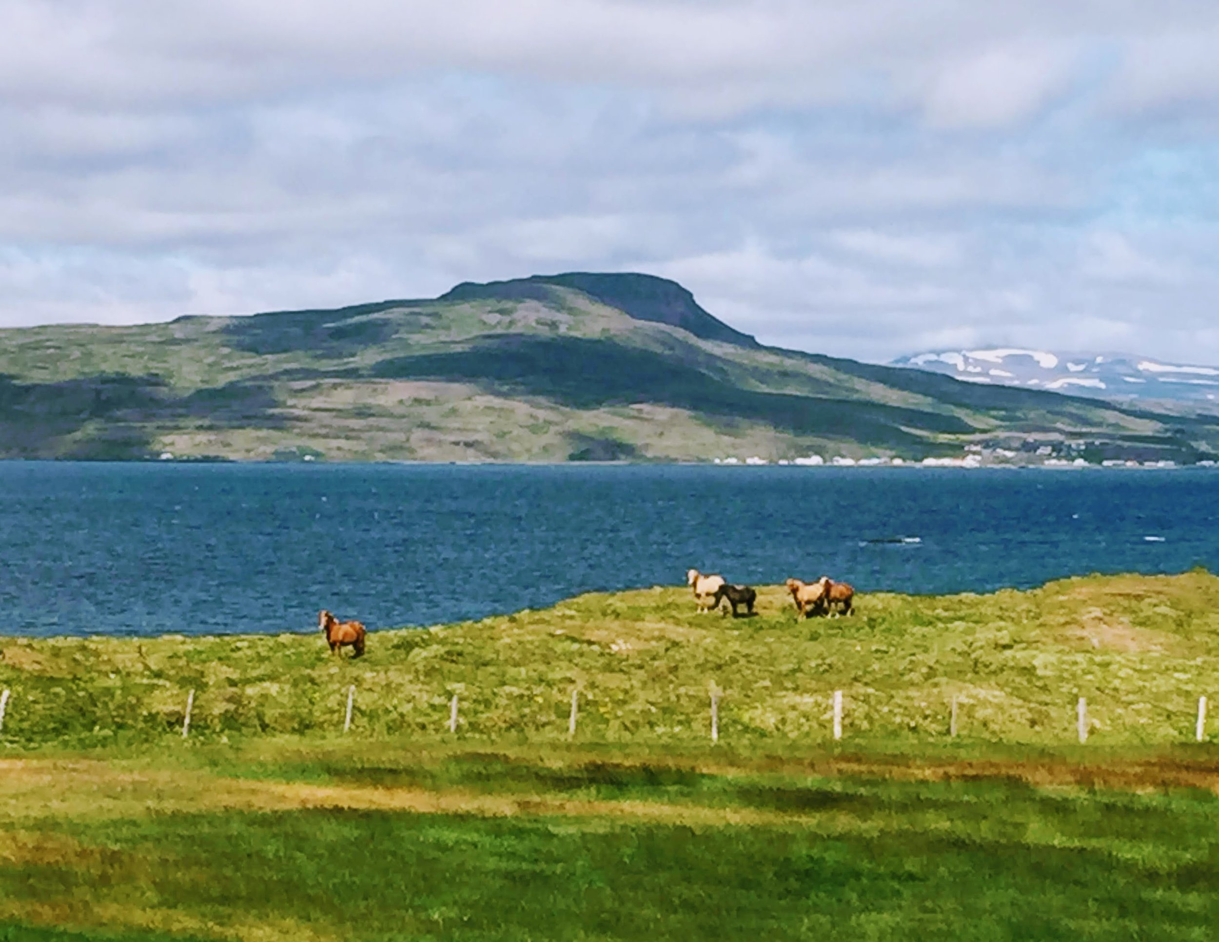 field of horses.JPG