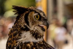 I'm very fond of owls too, Soldis. I got a photo of this handsome fellow in the village last summer .