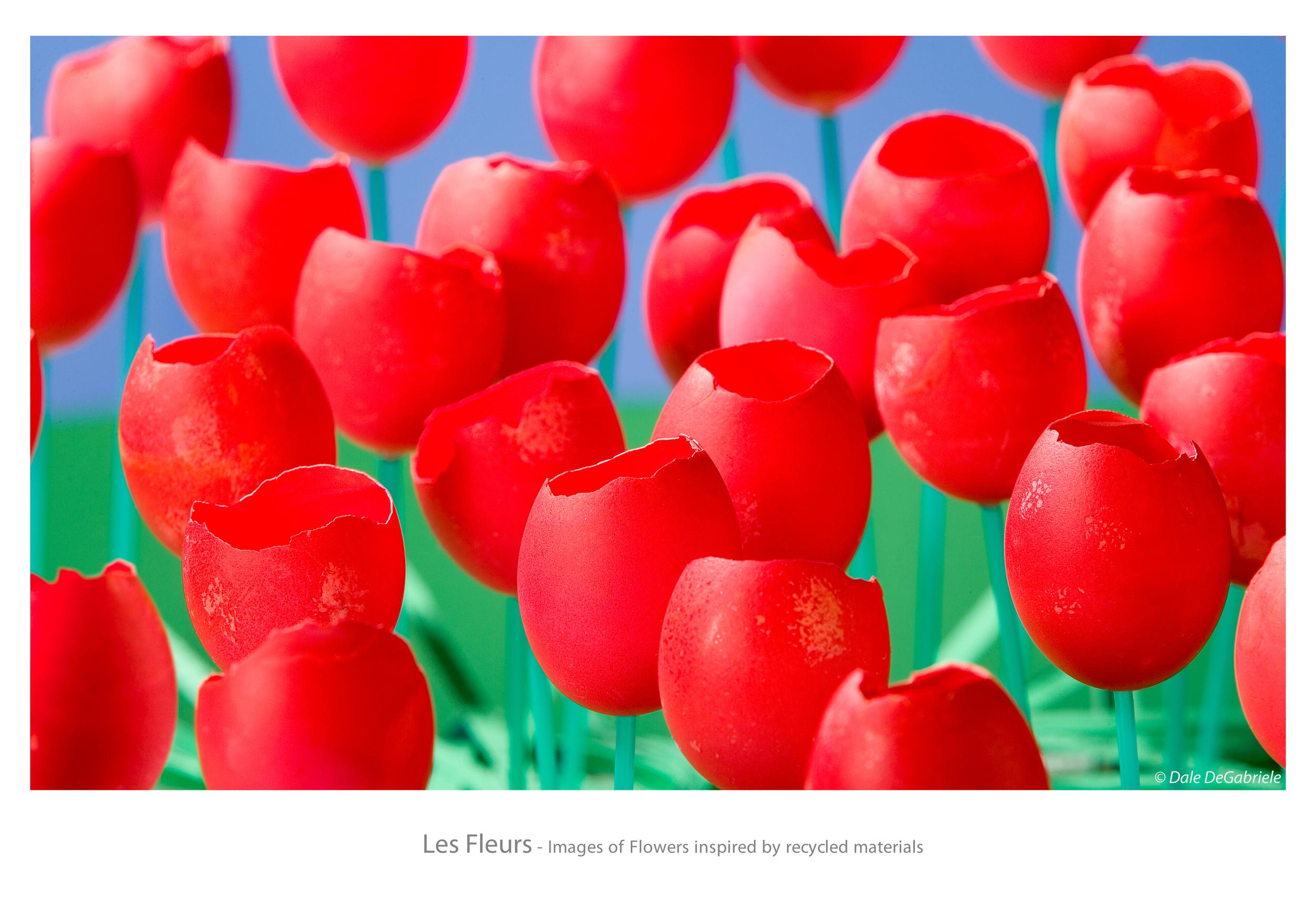 11822_1216_les_fleurs.jpg
