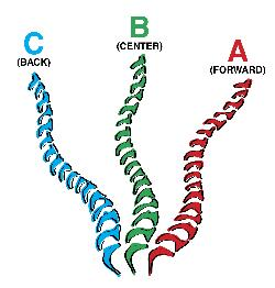 Three Spine Positions