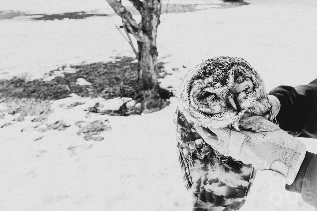 1_laROQUE_owl.jpg