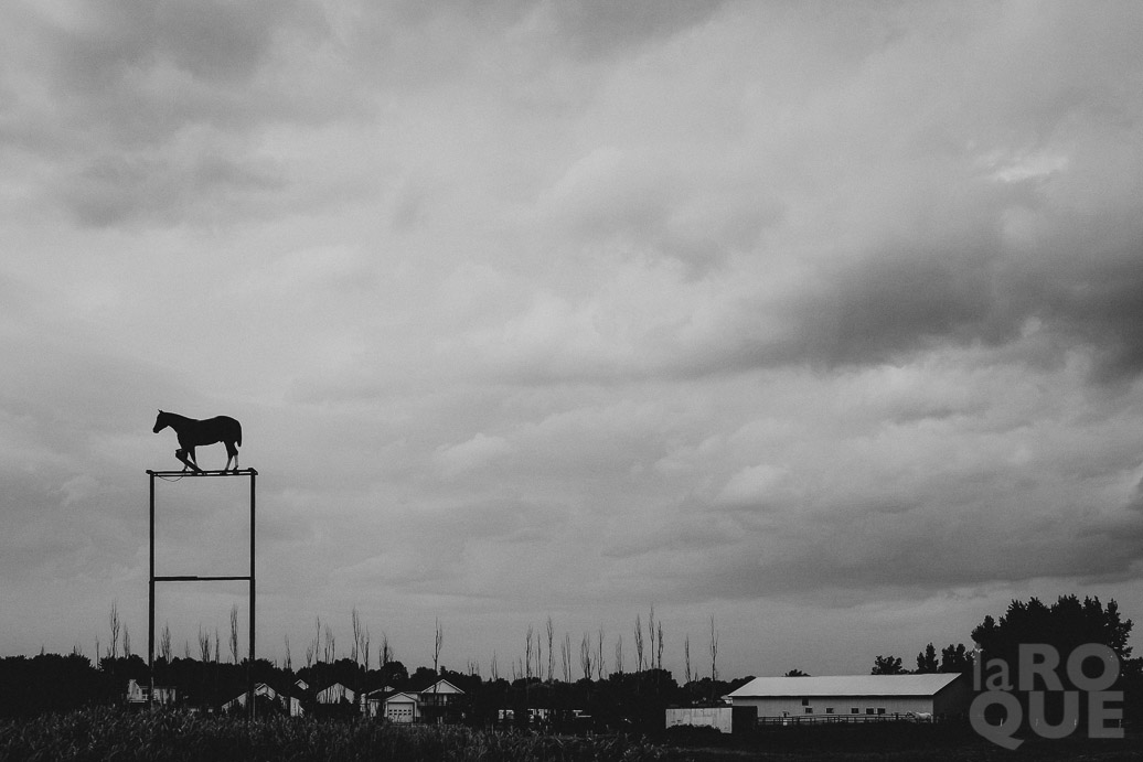 LAROQUE-horse-09.jpg