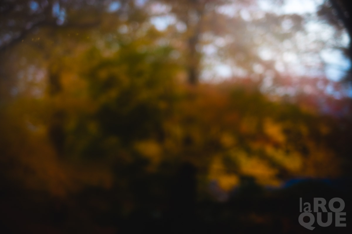 LAROQUE-morningx12-01.jpg