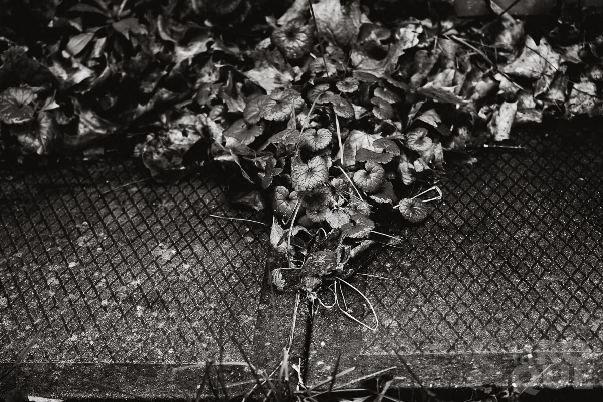 LAROQUE-october-hush-03.jpg