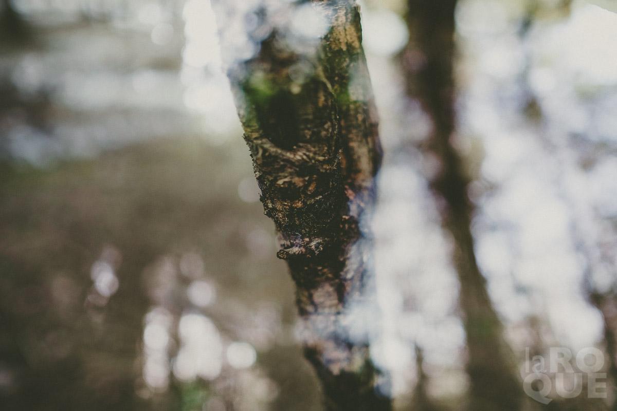 LAROQUE-hush-03.jpg