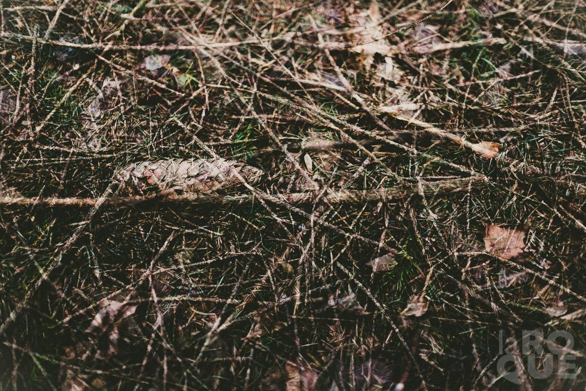 LAROQUE-hush-04.jpg