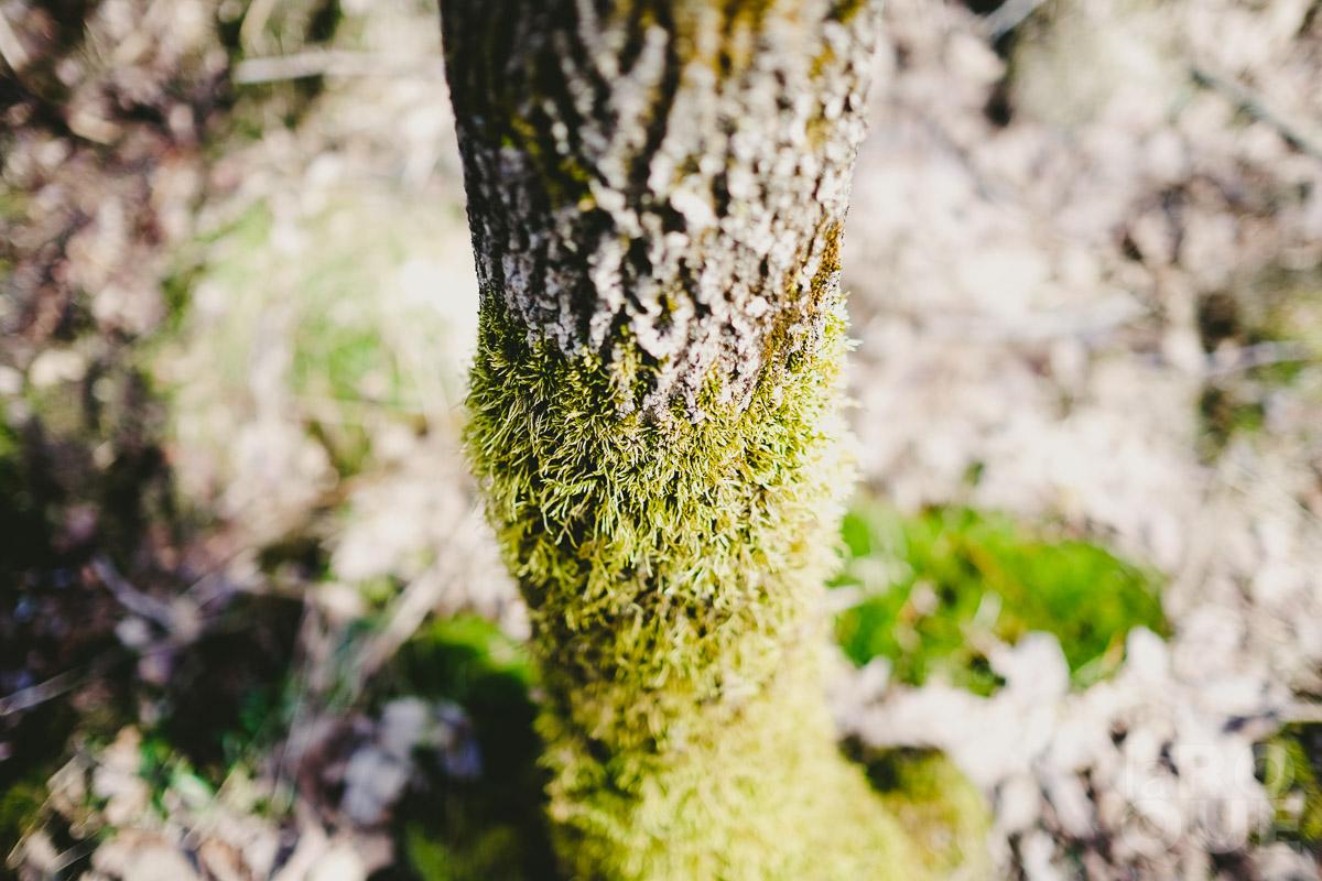 LAROQUE-hush-07.jpg