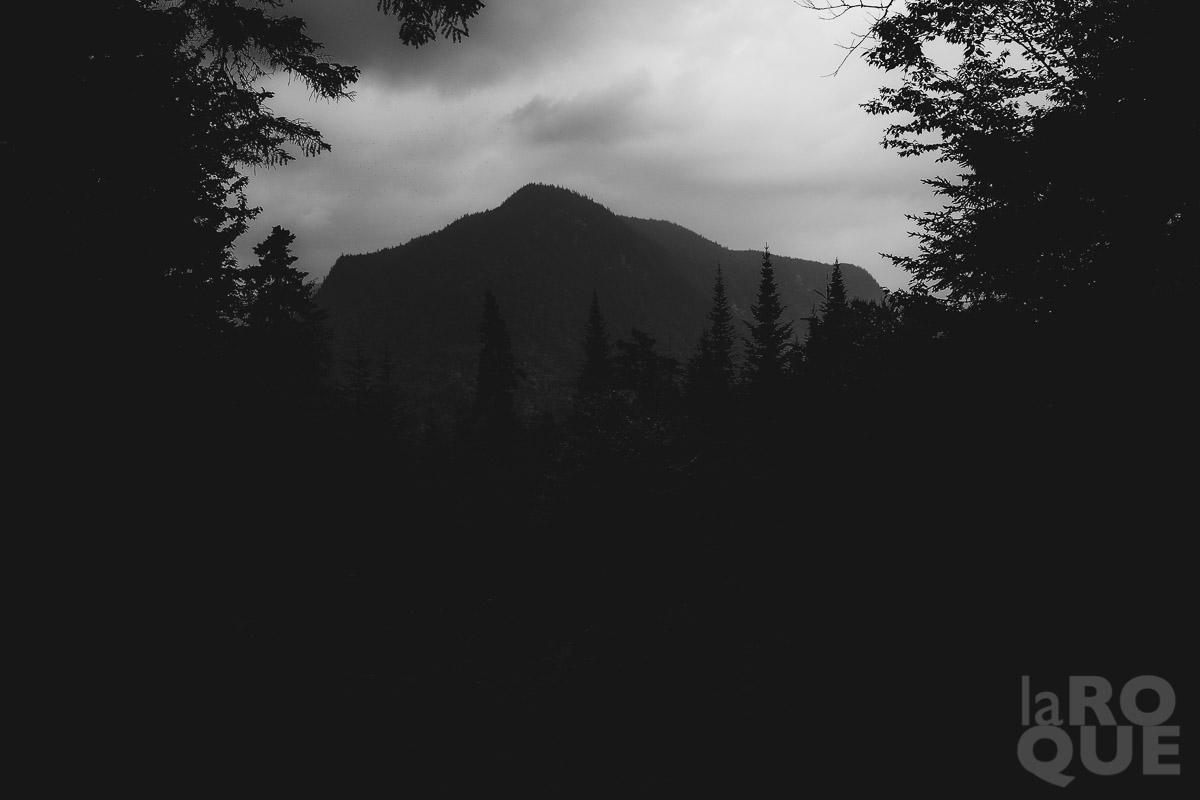LAROQUE-wildlings-04.jpg