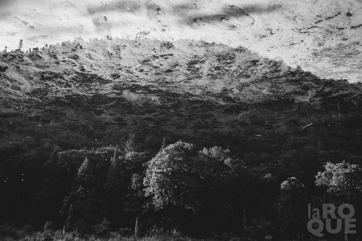 LAROQUE-wildlings-06.jpg
