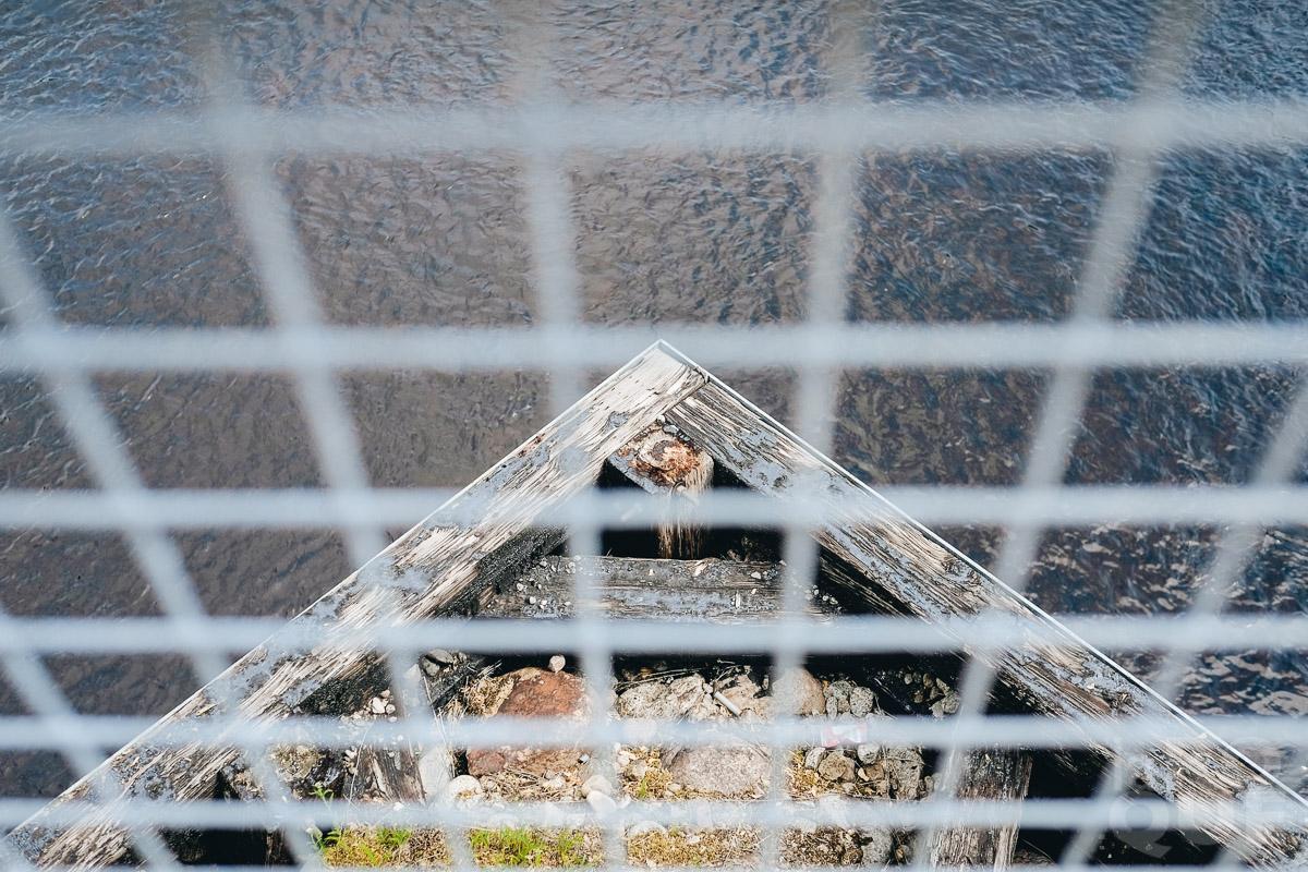 LAROQUE-wildlings2-09.jpg