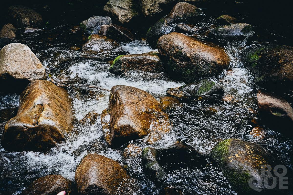 LAROQUE-wildlings2-12.jpg