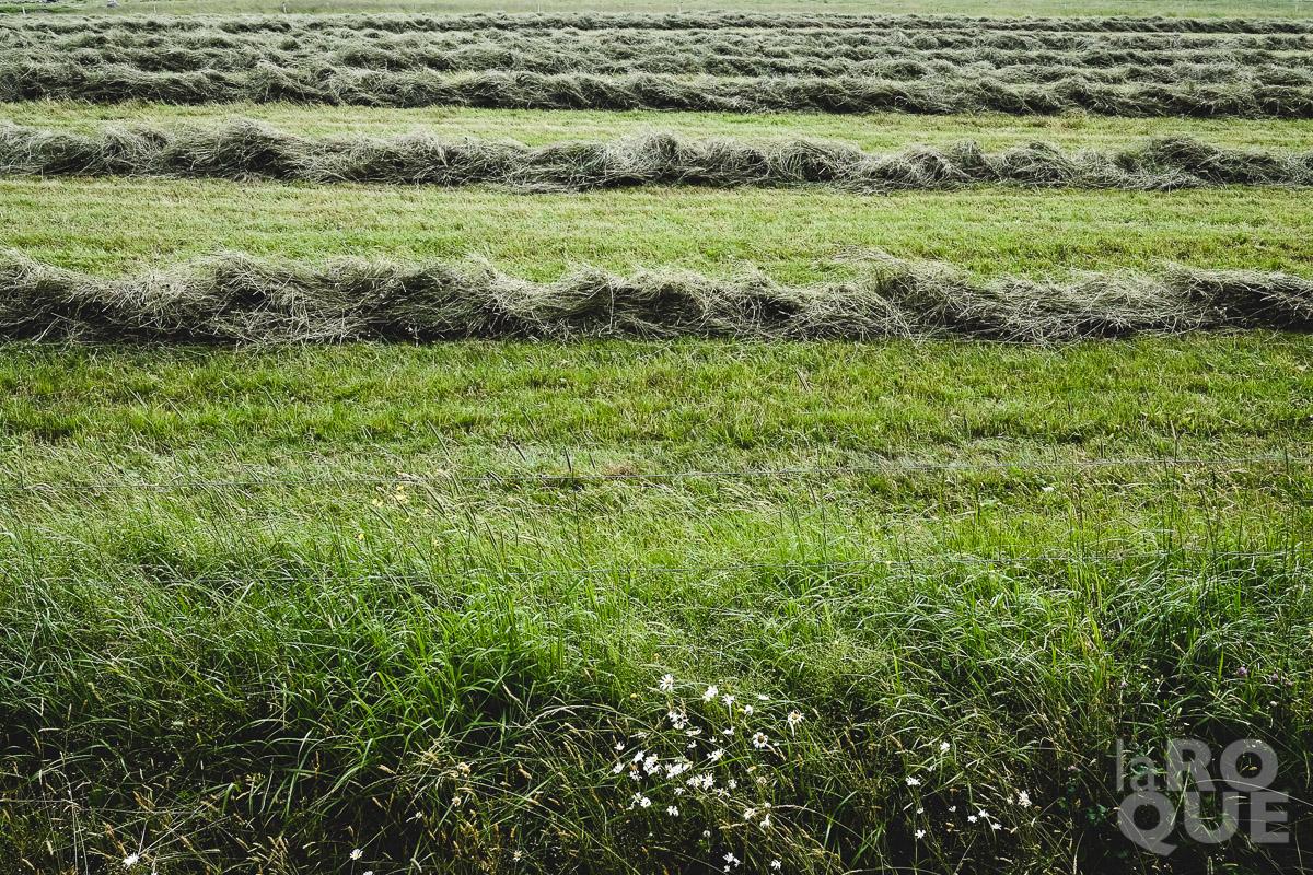 LAROQUE-wildlings5-02.jpg