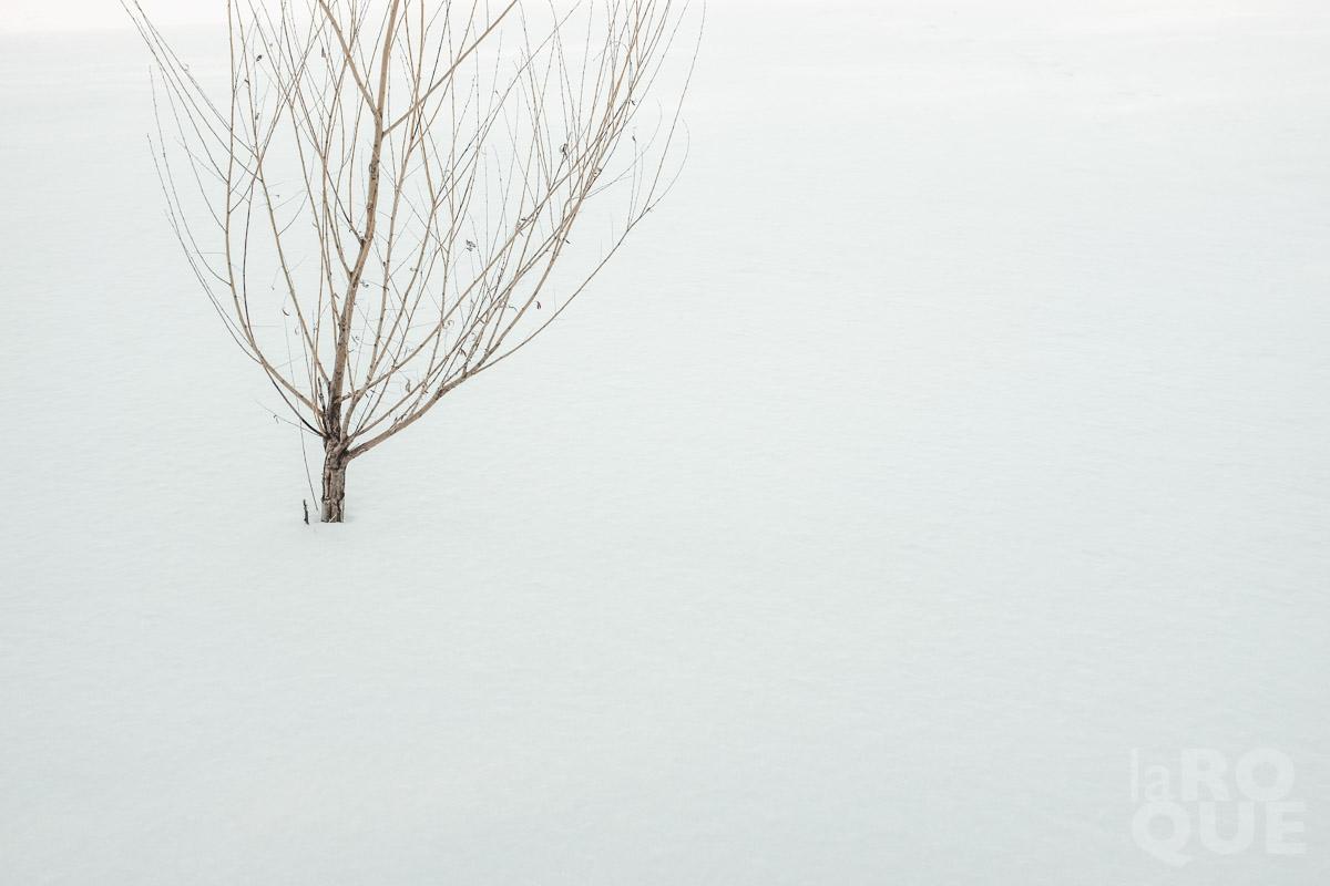 LAROQUE-frostbit-01.jpg
