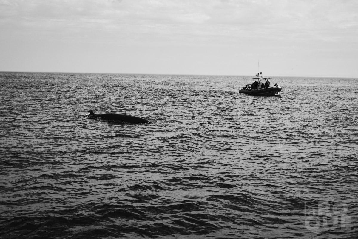 LAROQUE-beaches-whales-12.jpg