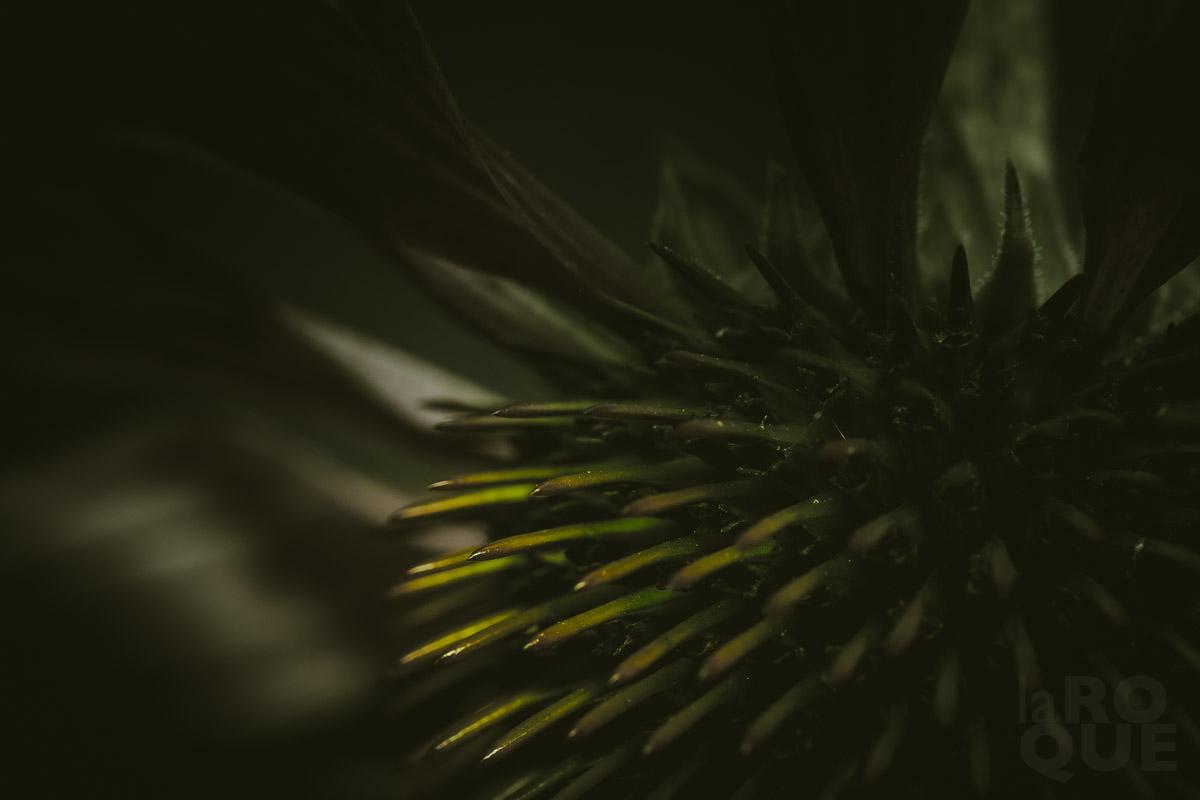 LAROQUE-backlit-screen-02.jpg
