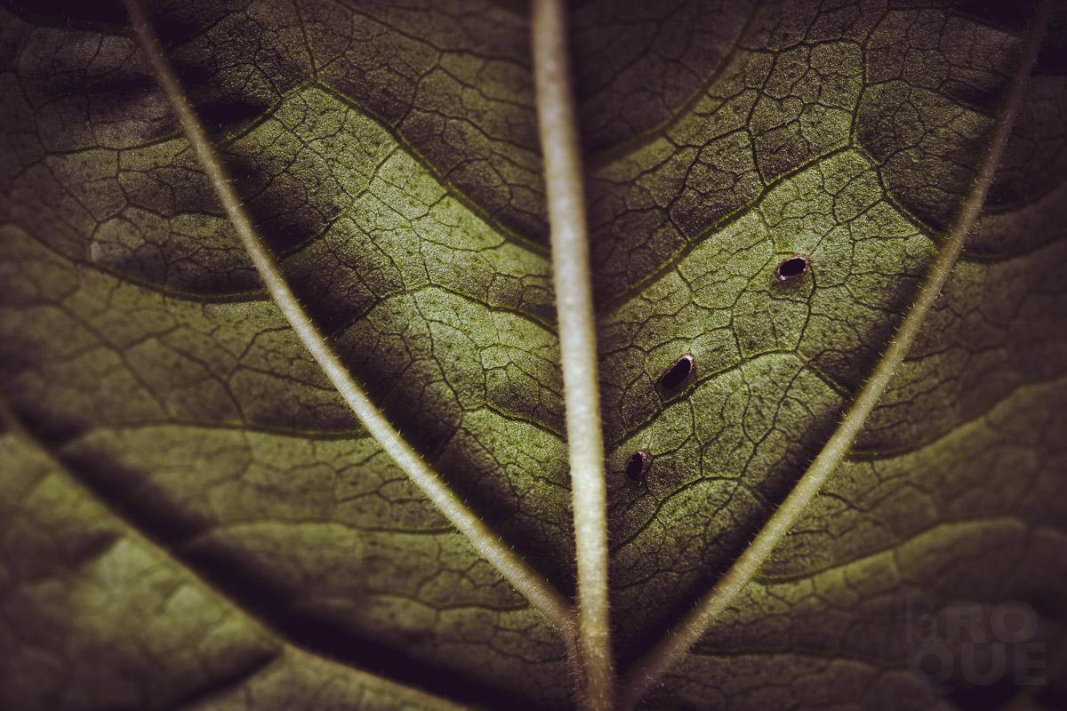 LAROQUE-backlit-screen-03.jpg