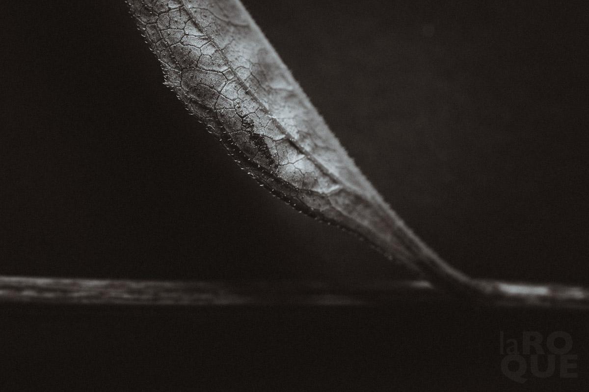 LAROQUE-backlit-screen-04.jpg