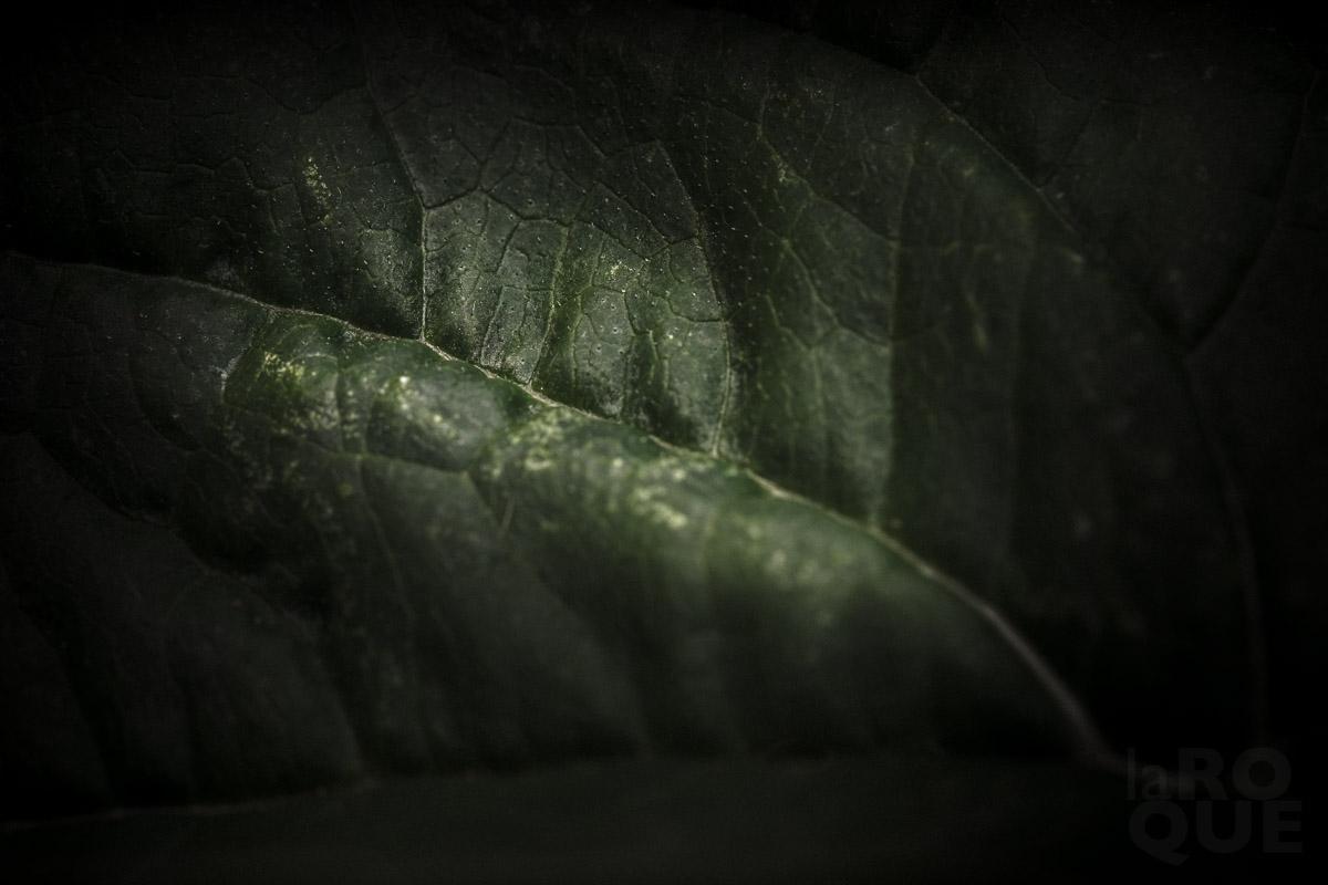 LAROQUE-backlit-screen-05.jpg
