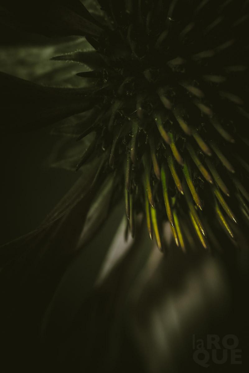 LAROQUE-backlit-screen-08.jpg