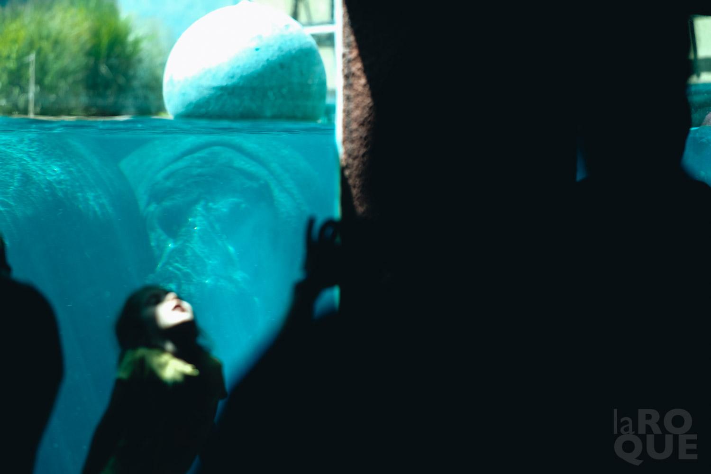 LAROQUE-animals-07.jpg