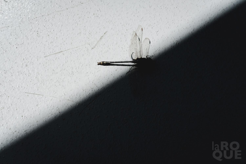 LAROQUE-ottawa-impressions-05.jpg