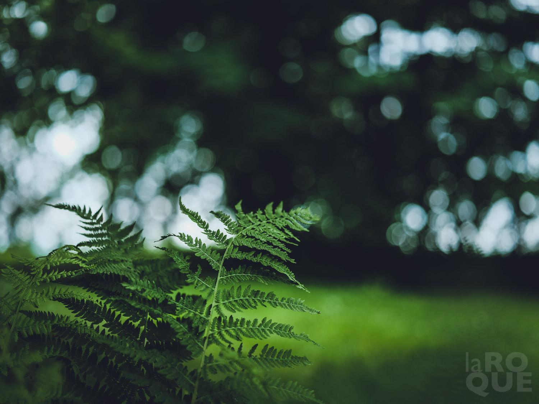 LAROQUE-all-the-green-01.jpg