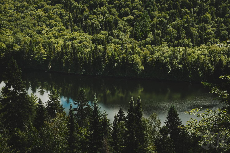 LAROQUE-wildlings5-04.jpg