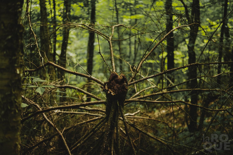 LAROQUE-wildlings5-07.jpg