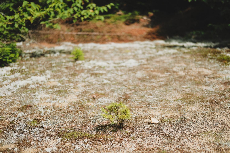 LAROQUE-wildlings5-10.jpg