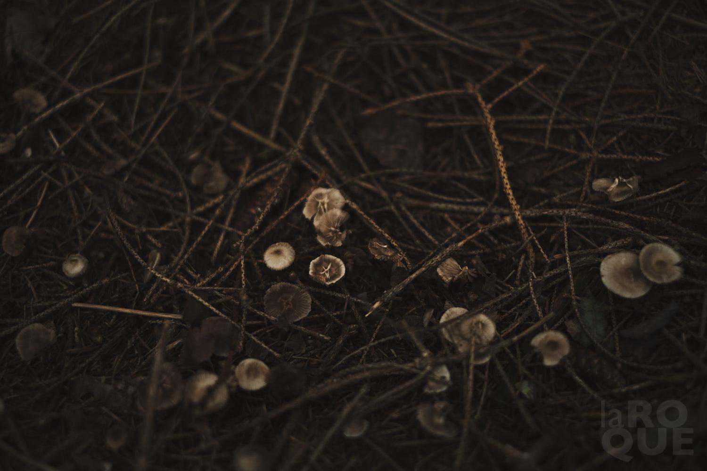 laROQUE-october-009.jpg