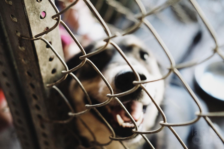 laROQUE-we-got-dog-006.jpg