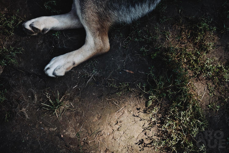 laROQUE-we-got-dog-008.jpg