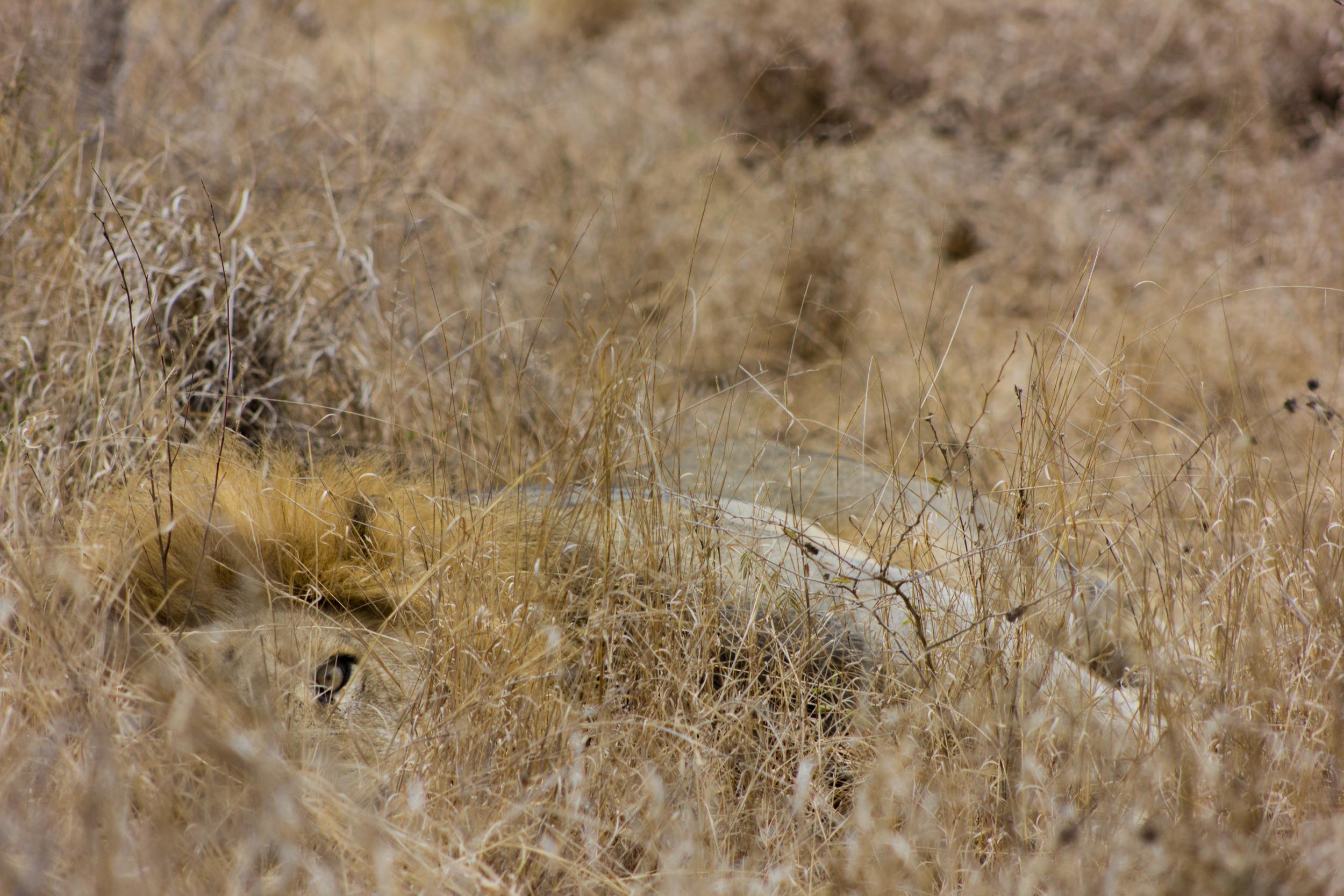 lioneye.jpg