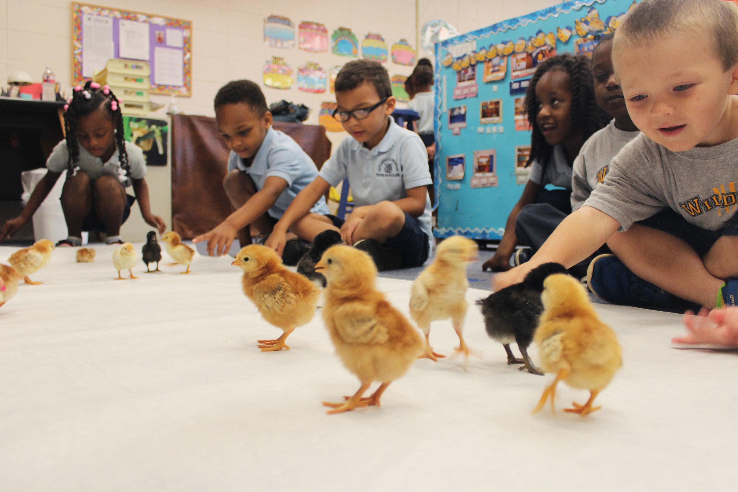 Ag in the Classroom — Louisiana Farm Bureau Federation