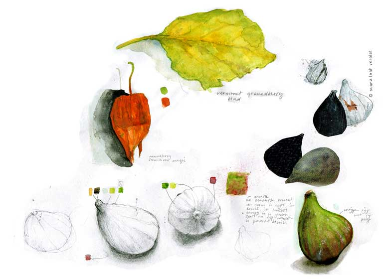 study of figs and ground cherry