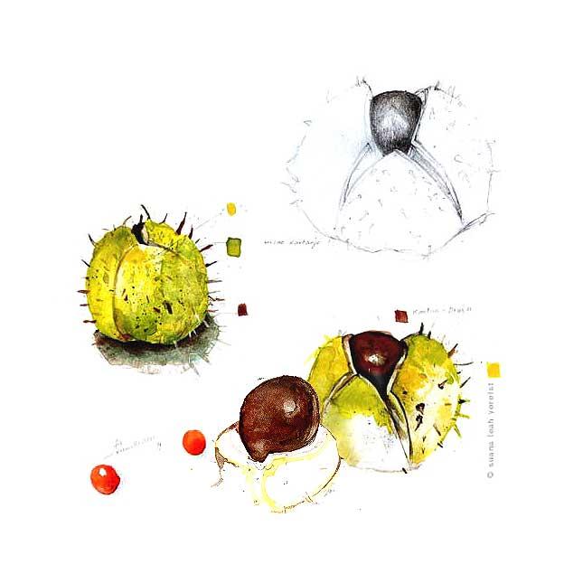 wild chestnuts, a study