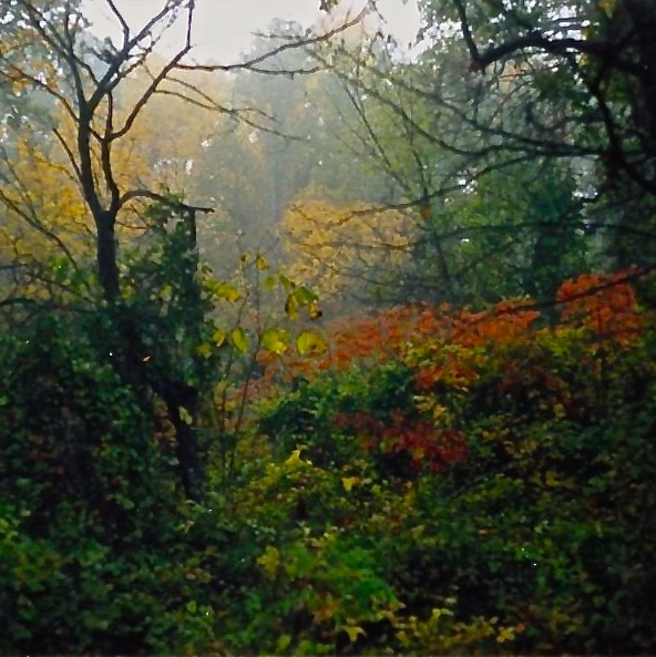 Autumn on Garrett Ranch.jpg