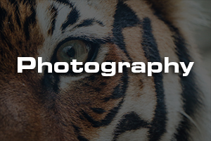 Photography 865.jpg