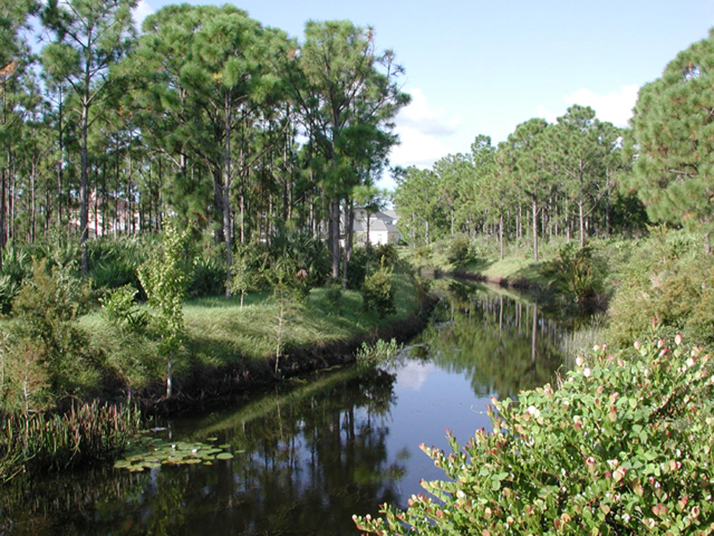 Abacoa Greenway Native Florda Planting.jpg