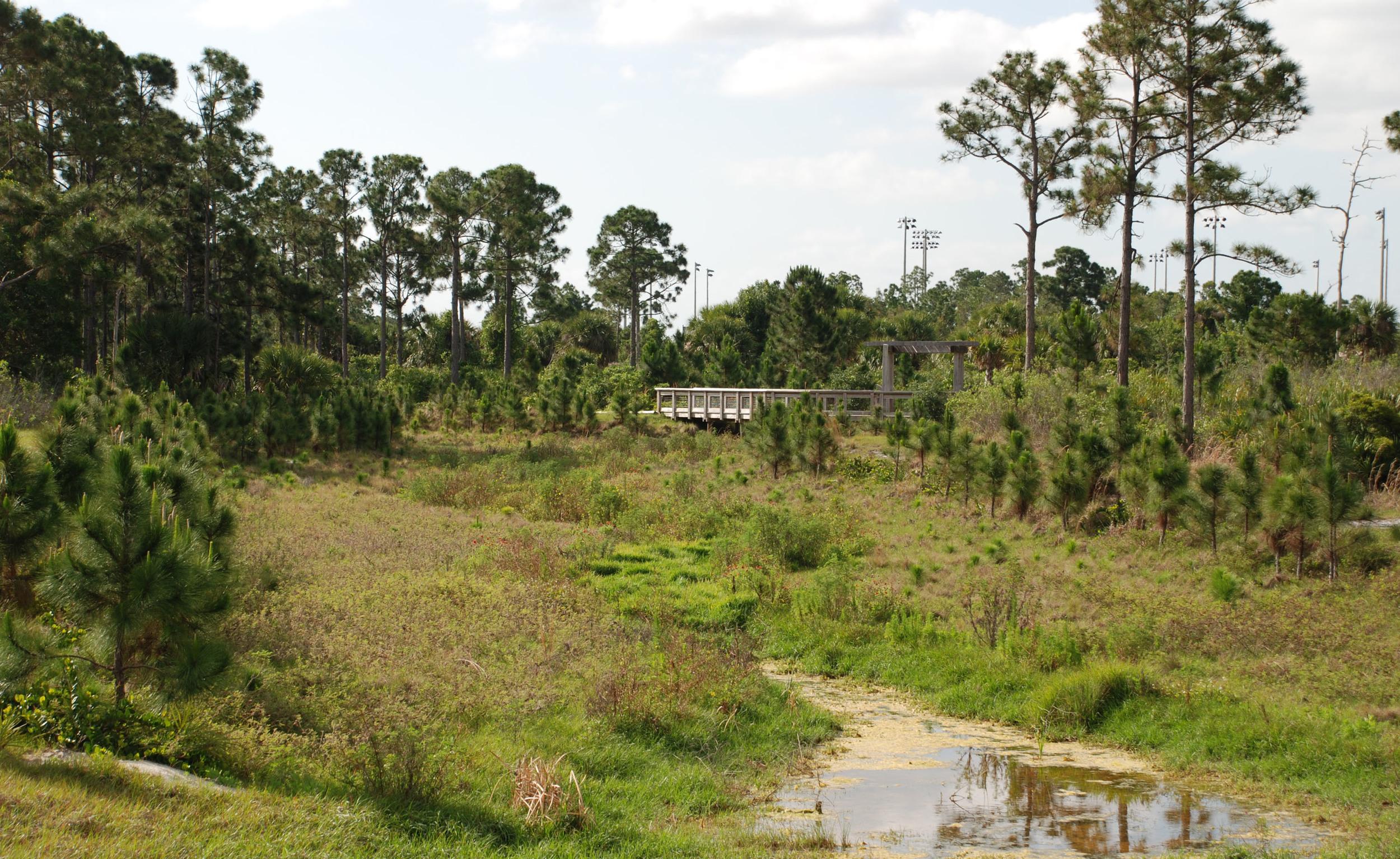 Abacoa Greenway Pine Flatwoods.jpg