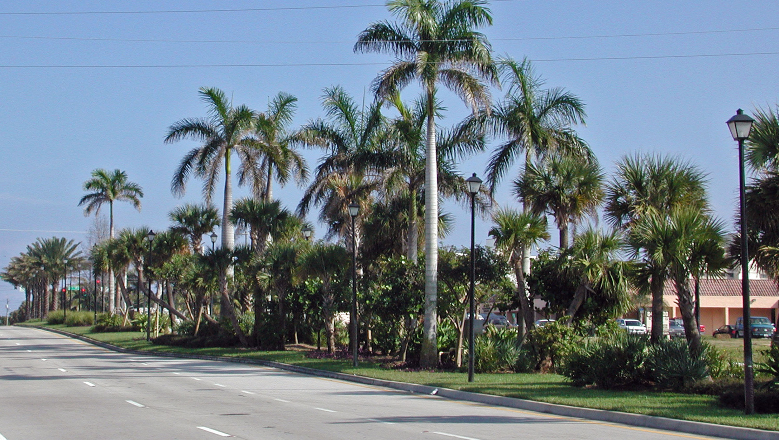 Donald Ross Road Palm Beach County Florida Landscape Informal Native Plantings.jpg